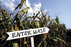 Cornfield Maze Enter