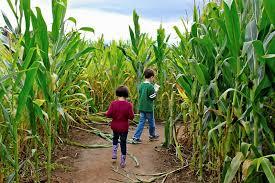 Cornfield Maze Kids